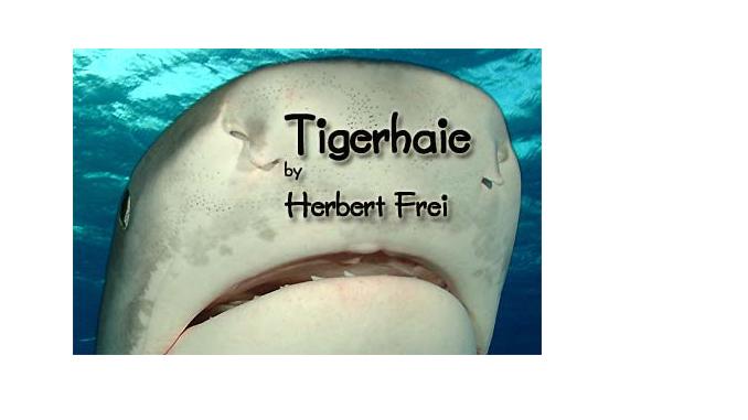 Tigerhai im Magazin UnterWasserWelt
