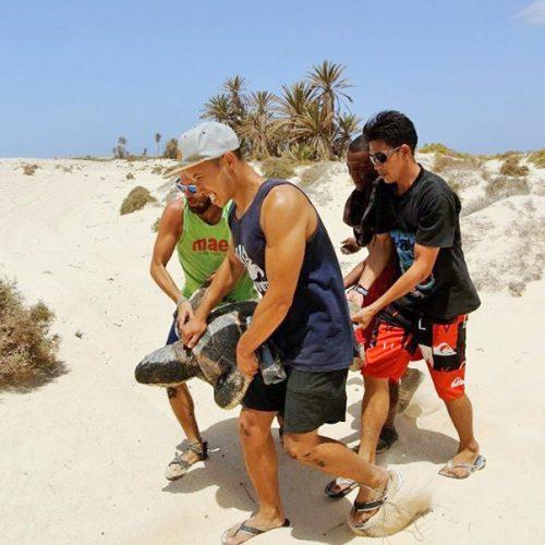 Rettungsaktion einer Unechten Karettschildkroete, die sich nach der Eiablage auf einem von der Turtle Foundation kontrollierten Strand auf der Kapverden-Insel Boavista verirrt hatte.