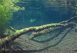 Flusstauchen Naab