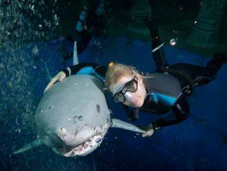 ssi freediving ausbildung level 2