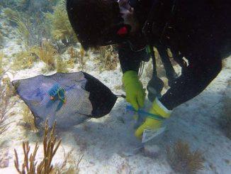 Korallenbleiche