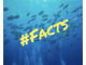 UnterWasserWelt News #facts Nr.1 Der Fischschwarm