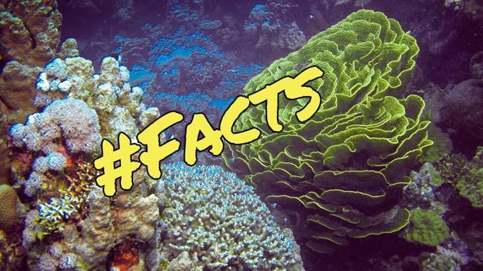 Geheimnis der Korallen