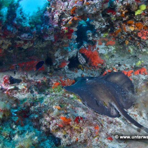 Pasito Blancol Reef