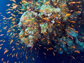Unterwasserlärm