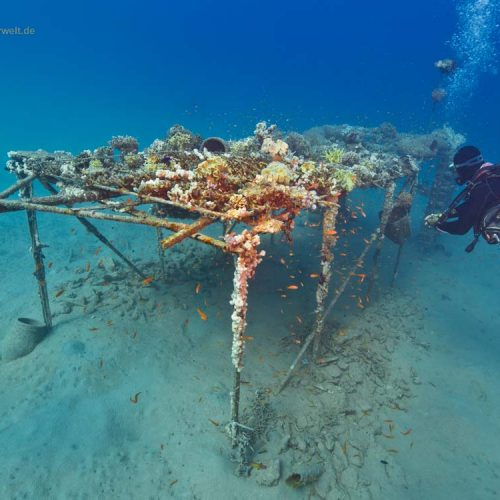 Riffkonstruktion zur Korallenansiedelung und Fischvermehrung