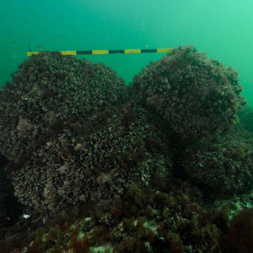 Steine im Wrack sind bis zu 0,7 m groß (c) Martin Siegel
